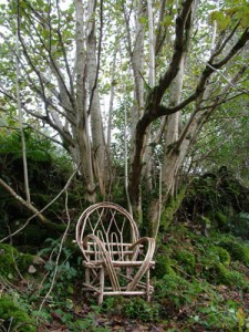 Bent wood chair with tree.