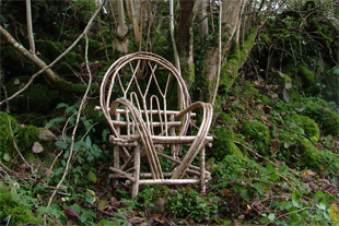 Bentwood chair with hazel tree.