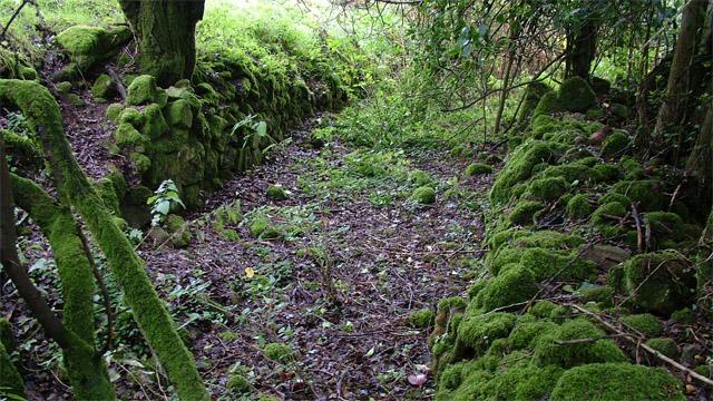 Woodland pathway, Co. Kilkenny